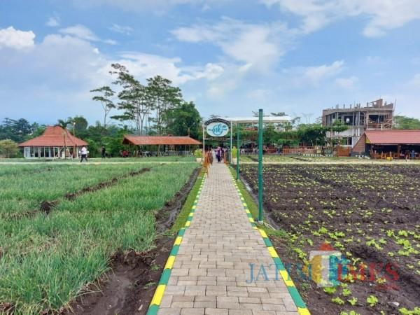 Jogging Track Desa Ampeldento Berpotensi Jadi Pesaing Kafe Sawah Pujon