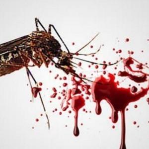 Wow! Cegah Virus DBD, Para Peneliti Singapura Ciptakan Nyamuk Baik