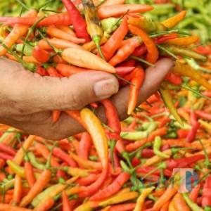 Harga Cabe Meroket, Pengusaha Kuliner di Tulungagung 'Molet-molet'