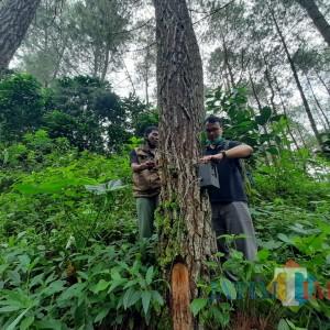 Lacak Penampakan Harimau, BKSDA Pasang 3 Kamera di Hutan Tulungagung