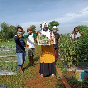 Lahan Tandus Disulap Jadi Penghasil Tanaman Holtikultura