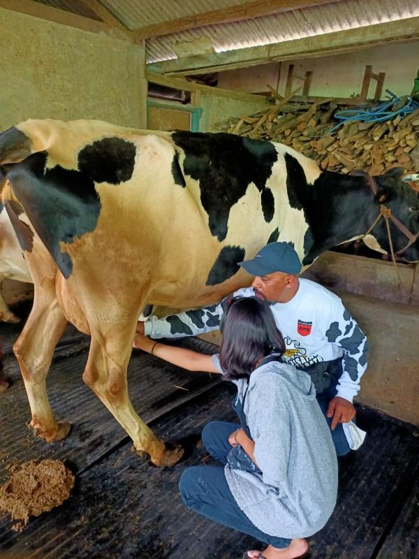 Bisnis Susu Perah Berpotensi Saat Pandemi Covid-19, Hingga Manfaat Bagi Imun Tubuh