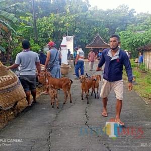 Pasar Hewan Ditutup, Penjual dan Pembeli Nekat Gelar Transaksi di Jalanan