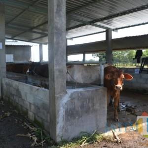 Bantuan Unit Pengolahan Pupuk Organik di Jombang Tersendat Alat dan Pelatihan