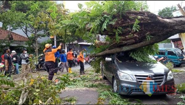Mobil Innova yang terparkir di salah satu sudut jalan di Jember yang tertimpa pohon roboh (foto : istimewa / JatimTIMES)
