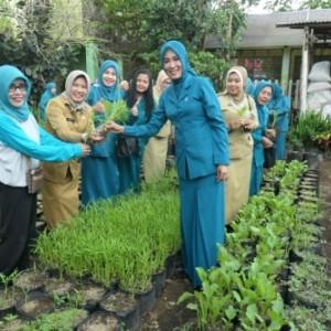 Genjot Pengolahan Pertanian Kota Malang, Dispangtan Gelar Lomba Urban Farming
