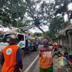 BPBD Kota Malang: Angin Kencang dan Hujan Lebat Penyebab 11 Pohon Tumbang
