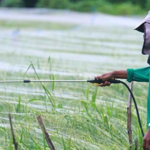 Harga Pupuk Naik, DKPP Kota Kediri Ajak Petani Bertanam Organik