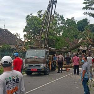 Angin Kencang Robohkan Pohon Besar di Kota Blitar