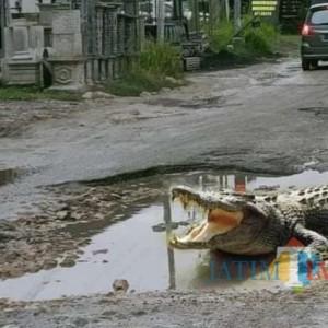 Ada Buaya di Jalan Rusak, Ternyata Ekspresi Sindiran Warga ke Pemkab Bangkalan