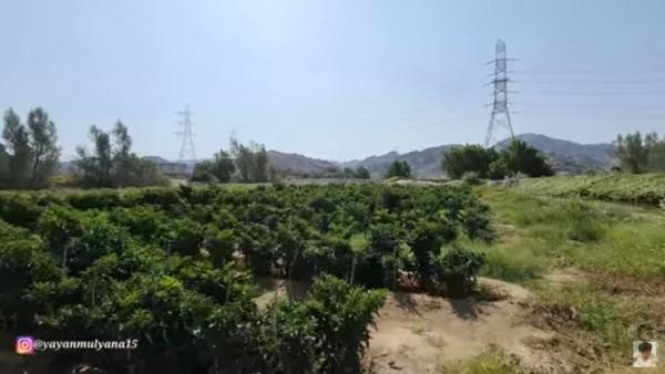 Kebun Abu Jahal (Foto: YouTube Alman Mulyana)