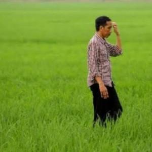 Impor Beras 1 Juta Ton, Pernyataan Jokowi Benci Produk Asing Kontradiktif?