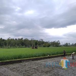 Sektor Pertanian Dipuji Gubernur Jatim, Bupati Sanusi Siap Tingkatkan Potensi Ekspor
