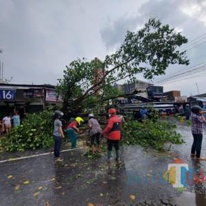 2 Jam Hujan Lebat Guyur Kota Malang, 10 Pohon Tumbang, 9 Kawasan Banjir