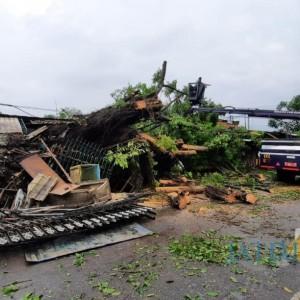 Satu Jam Hujan Deras Melanda Kota Malang, Lima Pohon Tumbang di Kecamatan Sukun
