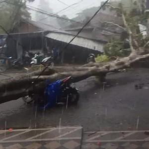 Hujan Deras, Satu Pohon Tumbang Menimpa Pengendara Motor di Jembatan Mergan