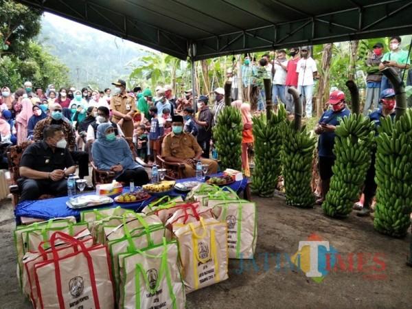 Pisang jenis baru yang diberi nama Pisang Mulyo saat ditinjau oleh Gubernur Jawa Timur Khofifah Indar Parawansa. (Foto: Ashaq Lupito/ JatimTIMES)
