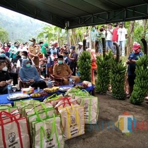 Pemkab Malang Siapkan Pendampingan Khusus kepada Petani Penemu Pisang Jenis Baru