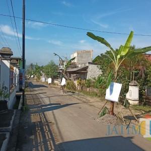 Rusak Parah, Pohon Pisang Akhirnya Berjajar di Jalan Desa Sumberagung