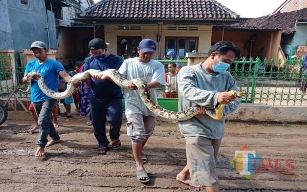 Warga Dusun Betek Barat, Desa Betek, Kecamatan Mojoagung, Jombang saat menunjukkan ular sanca sepanjang 4 meter. (Foto : Adi Rosul / JombangTIMES)