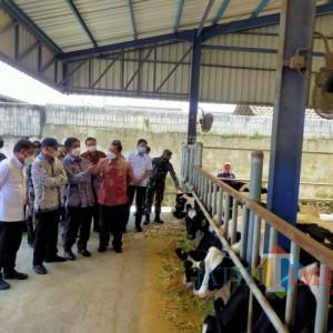 Tingkatkan Kualitas Susu, Koperasi SAE Terima Kucuran Rp 12 Miliar dari Kemenkop UKM