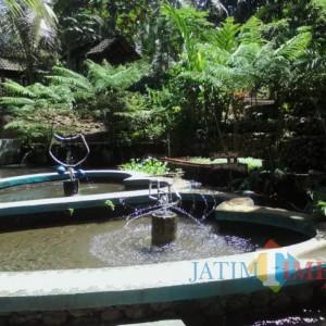 Nikmati Kesejukan dan Kesegaran Pemandian Alam Sumberwaras di Banyuwangi
