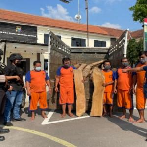 Curi Ratusan Batang Kayu Jati di Jombang, 7 Orang Berhasil Diringkus dan 1 Masih Buron