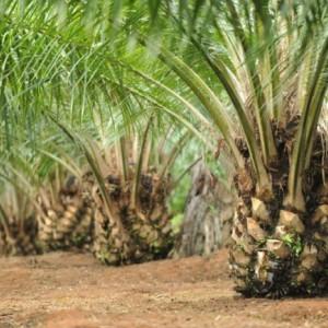 Bangun Pabrik Sawit di Hutan Malang Selatan, Perhutani: Kalau Ada Rencana, Tentu Ada Konversi Lahan (4)