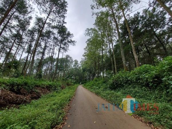 Tampak kondisi hutan di kawasan Desa Donowarih, Kecamatan Karangploso, Kabupaten Malang, Minggu (27/12/2020). (Foto: Tubagus Achmad/MalangTIMES)