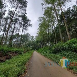 Hutan di Kabupaten Malang Mulai Rusak, Picu Bencana Alam, Bagaimana Kalau Ada Pabrik Kelapa Sawit? (3)