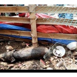 Kuburan Babi Ngepet Dibongkar, Ini yang Ditemukan Polisi