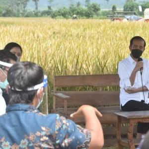 Pantau Panen Raya di Kabupaten Malang, Presiden Jokowi Tegaskan Tak Perlu Impor Beras