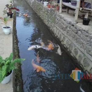 Dulunya Jadi Pembuangan Sampah, Desa di Banyuwangi ini Sulap Sungai Jadi Wisata Ikan Air Tawar