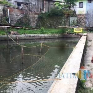 Diduga Tercemar Limbah Kotoran Ternak, Sungai Kebo Jadi Hijau dan Berbau Tak Sedap