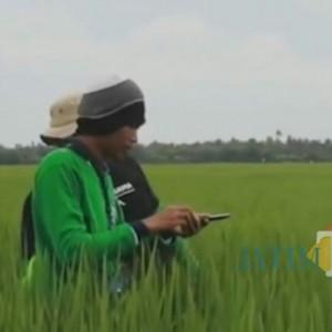 Sejahterakan Petani, Dinas Pertanian Kabupaten Lumajang Tingkatkan Kualitas Data Tanaman