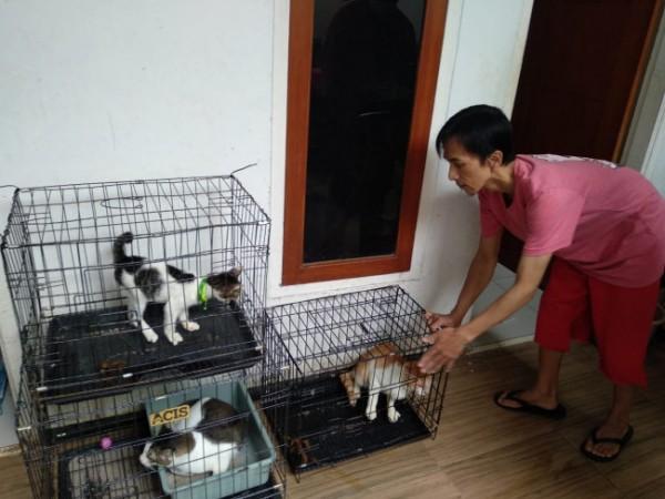 Potret perawatan di penitipan kucing Phie Cat yang kebanjiran order jelang lebaran tahun ini. (Foto: Istimewa).