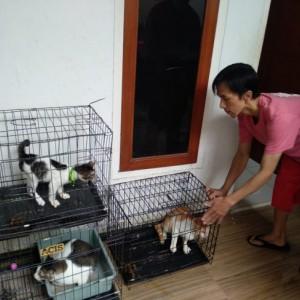 Penitipan Kucing di Kota Malang Kebanjiran Pelanggan Jelang Lebaran 2021