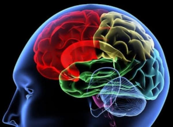 Ilustrasi otak manusia (bolmora)