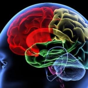 Mencengangkan, Ini Perbedaan Otak Orang Beriman dan yang Tak Beriman