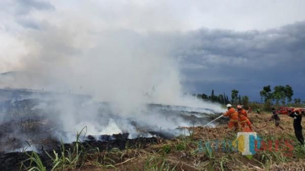 Kebakaran lahan yang terjadi beberapa saat lalu di Kota Batu.