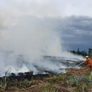 Masuki Kemarau, Kota Batu Waspadai Kebakaran Hutan dan Lahan