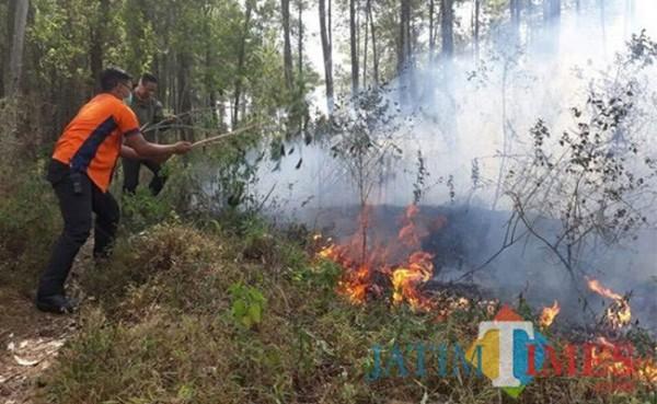 Kebakaran yang terjadi di kawasan hutan. (Foto: istimewa)
