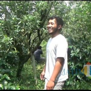Petani Kopi Asal Kota Batu Hasilkan Citarasa Buah Apel