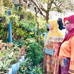 Penjualan Bunga di Kota Batu Turun 80 Persen