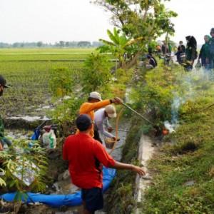 Jaga Ketahan Pangan Masyarakat, GPK Jombang Bantu Petani Basmi Hama Tikus