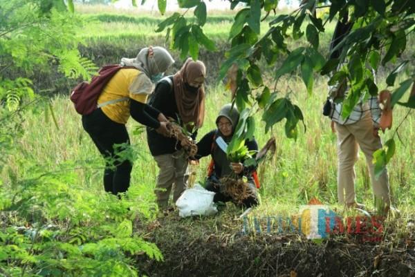 Saat anggota Green Nusantara menanam pohon (Foto: Abror Rosi/JatimTimes)
