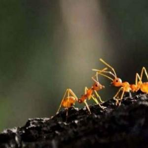Al-Quran Jelaskan Semut Bisa Berbicara, Begini Pembuktian Ilmuwan