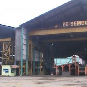 PG Semboro Mulai Musim Giling, Warga Sekitar Panen Abu Pabrik