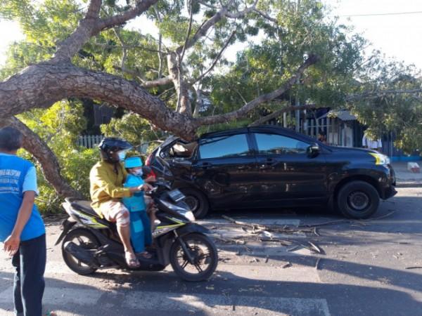 Minibus Avanza ringsek tertimpa pohon tumbang. (Foto : Humas Polres Blitar for BlitarTIMES)