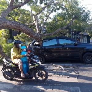 Traffict Light Menyala Merah, Minibus di Blitar Ringsek Tertimpa Pohon Tumbang
